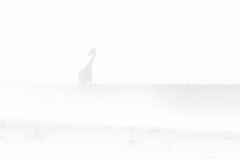Giraffe in Sand Storm