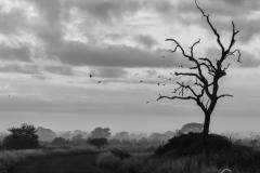 Dead Tree on S100