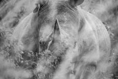 Lurking Rhino